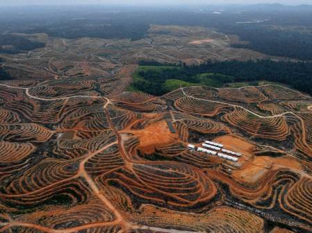 21-deforestation-afp(2)