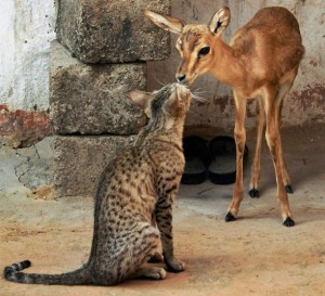 cat and doe