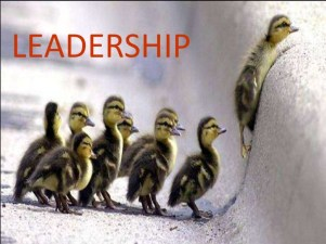 leadership-ducklings